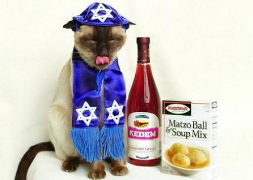 Jewish-Pets-11-e1364227560731